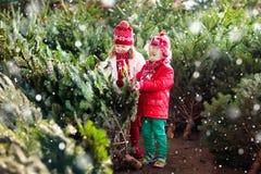 Les enfants sélectionnent l'arbre de Noël Famille achetant l'arbre de Noël Photos libres de droits