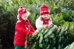 Les enfants sélectionnent l'arbre de Noël Famille achetant l'arbre de Noël Photo stock