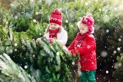 Les enfants sélectionnent l'arbre de Noël Famille achetant l'arbre de Noël Photo libre de droits