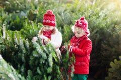 Les enfants sélectionnent l'arbre de Noël Famille achetant l'arbre de Noël Photos stock
