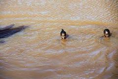 Les enfants se baignent en rivière boueuse, Madagascar Photos libres de droits