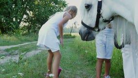 Les enfants, un garçon et une fille de sept ans, ont alimenté un poney blanc, donnent pour manger des carottes Vacances de famill banque de vidéos