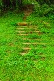 Les escaliers dans les bois Image libre de droits