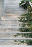 Les escaliers de ciment blanc ont couvert l'usine verte de lierre de feuilles la verdure logent l'idée à la maison de conception  Photographie stock libre de droits
