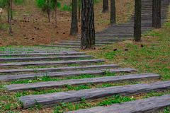 Les escaliers en bois se prolongent dans les bois Image stock