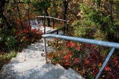 Les escaliers mènent vers le bas par la forêt Images libres de droits