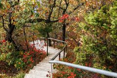 Les escaliers mènent vers le bas par la forêt Images stock