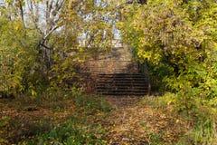 Les escaliers sont envahis avec des arbres Photos libres de droits