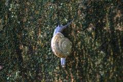 Les escargots grimpent aux arbres photos stock