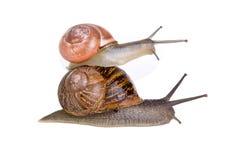 les escargots ont empilé Photographie stock libre de droits