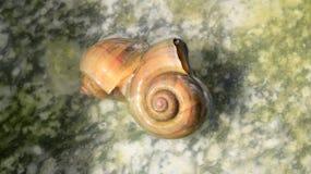 Les escargots sont dans l'amour Photo libre de droits