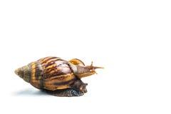 Les escargots sur le fond blanc, peuvent donner l'amour Photo stock