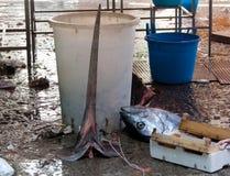 Les espadons gaspillent à la poissonnerie Images stock