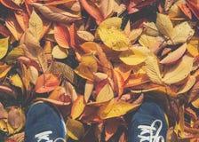 Les espadrilles d'automne de chute folâtrent le perspect de point de vue du parc POV de chaussures Image libre de droits