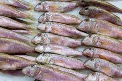Les esprots frais pêchent sur la glace au marché 2 de produit alimentaire Image libre de droits