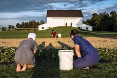 LES Etats-Unis - L'Ohio - Amish Image stock