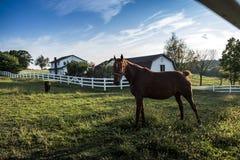 LES Etats-Unis - L'Ohio - Amish Photos stock