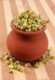 Les fèves de mung poussent sur le pot avec le contexte en bois Photographie stock