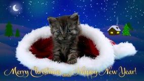 Les félicitations cardent avec le petit chaton très mignon (incluez le texte) clips vidéos