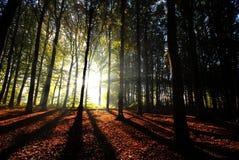 Les faisceaux de lumière pleuvoir à torrents par les arbres Images stock