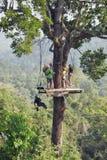 Les fans du repos extrême, les gens sont dans la bonne forme physique à déplacer autour de la jungle sur des cordes Image stock