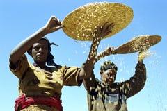 Les femmes éthiopiennes séparent des paillettes du grain Photos stock