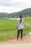 Les femmes asiatiques au riz en terrasse vert mettent en place, l'AMI de Mae Klang Luang Chiang Image libre de droits