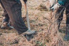 Les femmes creusent les actions dans la for?t pour la planter dans le jardin photographie stock