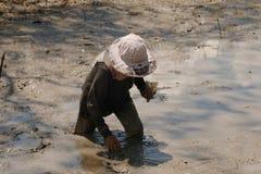 Les femmes d'un agriculteur regarde le fishg dans la boue photos stock