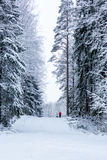 Les femmes dans la forêt d'hiver Photos stock