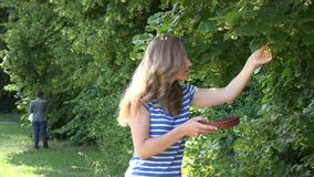 Les femmes de Herbalist sélectionnent des herbes de fleurs de tilleul des branches d'arbre en parc 4K banque de vidéos