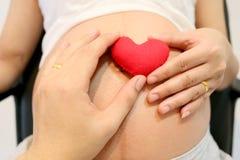 Les femmes enceintes main et la main de mari gardent un pla rouge de symbole de coeur Photographie stock