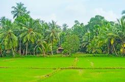 Les fermes de riz de Hikkaduwa Images libres de droits