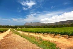 Les fermes de vin à Capetown, Afrique du Sud photographie stock libre de droits