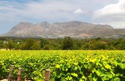 Les fermes de vin à Capetown, Afrique du Sud image libre de droits