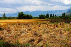 Les fermes sur le plateau du Qinghai Thibet en hiver assaisonnent photographie stock libre de droits