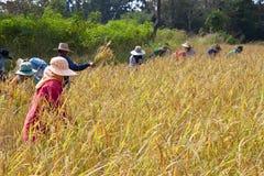 Les fermiers moissonnent Photo libre de droits