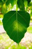 Les feuilles Photographie stock