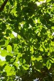 Les feuilles Photo libre de droits