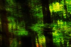 Les feuilles abstraites clignotent photos stock
