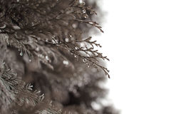 Les feuilles avec des baisses de rosée photographie stock libre de droits