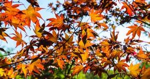 Les feuilles colorées d'automne ont capturé sur la terre, abrégé sur natures Images stock