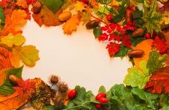 Les feuilles colorées de chute avec le gland et la bruyère se sont chargées d'encadrer sur W photographie stock libre de droits
