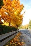Les feuilles d'érable tombent sur une rue pendant la chute Image stock