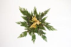 Les feuilles d'arbre ont arrangé dans la forme d'étoile d'isolement sur le blanc Image stock