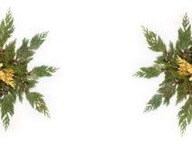 Les feuilles d'arbre ont arrangé dans la forme d'étoile d'isolement sur le blanc Photographie stock libre de droits