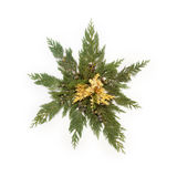 Les feuilles d'arbre ont arrangé dans la forme d'étoile d'isolement sur le blanc Photos libres de droits