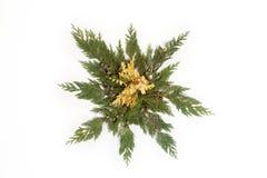 Les feuilles d'arbre ont arrangé dans la forme d'étoile d'isolement sur le blanc Images libres de droits