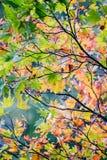 Les feuilles d'automne avec le flambage colore le soleil lumineux de withs photos libres de droits