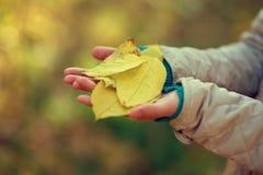 les feuilles d'automne chez des mains du ` s des enfants, mains du ` s d'enfants tiennent les feuilles jaunes images stock